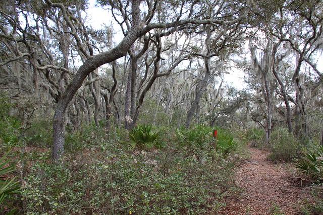 Pretty Oak Scrub On Bay Loop Trail Bay Loop Trail