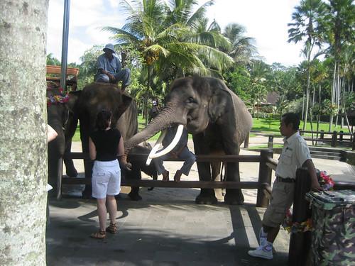 Elephant Safari Park, Taro, Bali