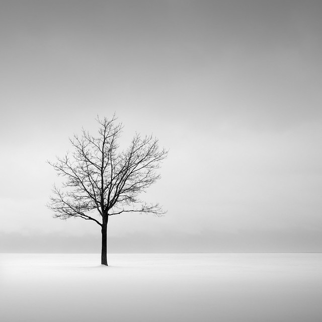 4419067636 69364c251e z [Pics] Flickr Spotlight – Lonely Trees