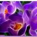 Springalicious by LadyDragonflyCC - >;<