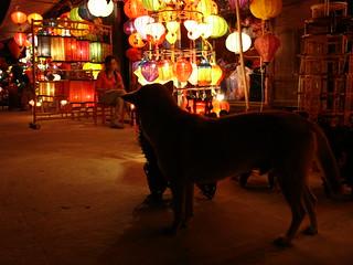 Dog in Hoi An Night