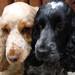 Best friends! by cocopie