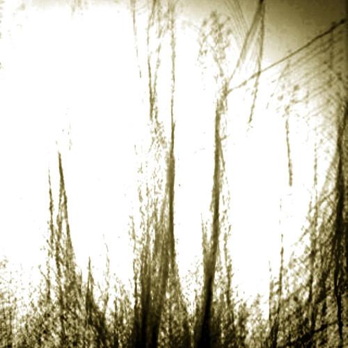 abstract japan tokushima anan 2010 iphone takenwithaniphone kuwano daveweekes