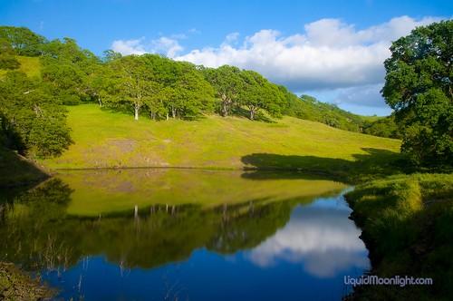 california usa tree grass america reflections landscape us spring pond oak shell hills ridge coastal pasture diablo darvin atkeson カリフォルニア州 darv 캘리포니아 美国加州 liquidmoonlightcom