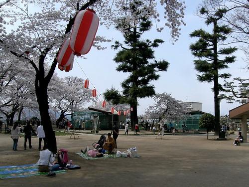 geotagged hanami takasaki 花見 群馬県 高崎 gummaprefecture geo:lat=363202 geo:lon=139002477