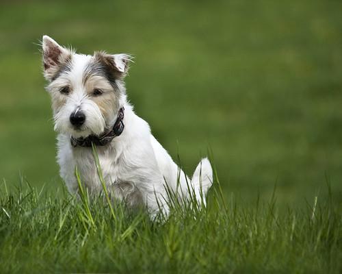 Community dog