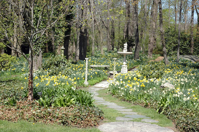Columns Daffodils Path At Blithewold Gardens Flickr Photo Sharing