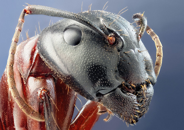 4591473277 94fef0d809 z 25 Insanely Detailed Macro Images Of Insects