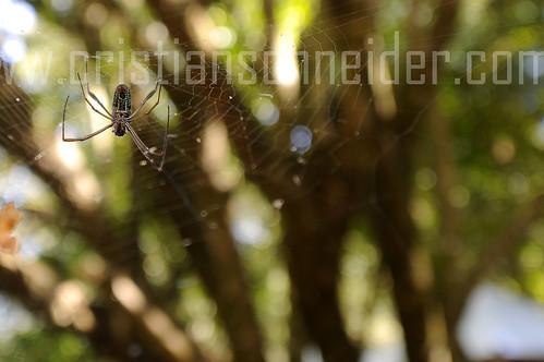 web nature