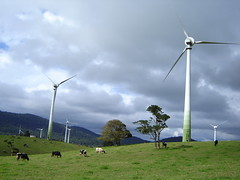 prairie, windmill, field, wind, wind farm, electricity, wind turbine, grassland,