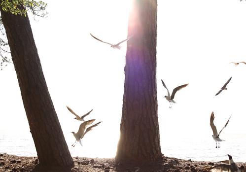 sea sun tree beach mobile bay gull fairhope
