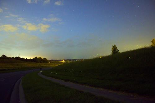 firefly hillside