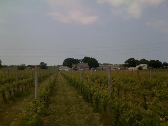 Shinn Vineyards North Fork L I