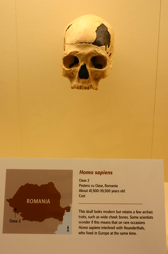 Homo Sapiens 41,500 to 39,500 Years Old