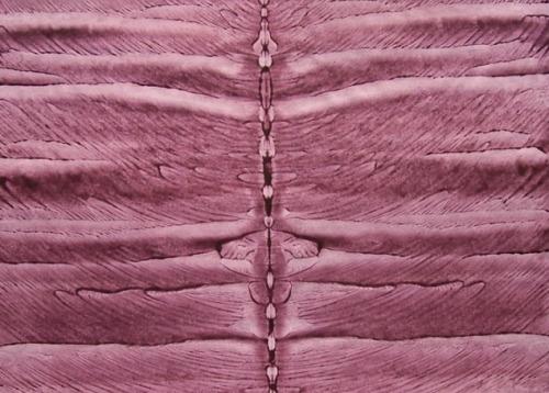 lila-schmetterling-1
