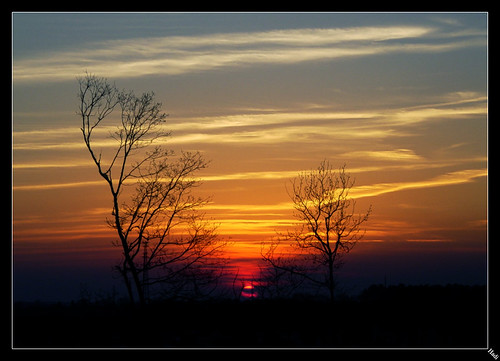 africa winter sunset sky orange cold tree fall lines clouds sunrise dark skies bare mysterious between