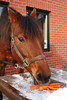 Merry Christmas, Pony!  by pferdeohren