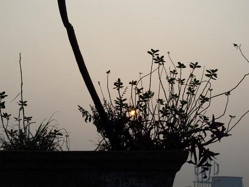 sunrise bagh karol pankaj pankajanand anandparbat newdelhi5 pankajanand18