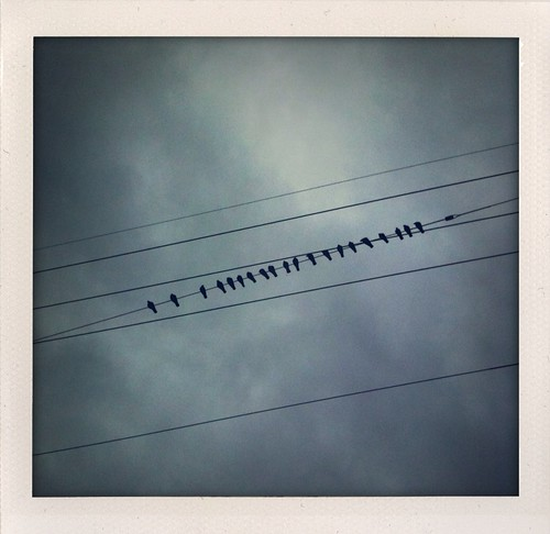 Day 157/365 - Birds on a Wire