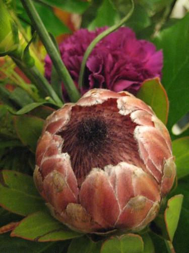 Protea ja neilikka by Anna Amnell