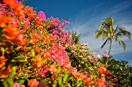 Hawaii Vacation Deals u0026 News: March 23, 2011 - Go Visit Hawaii