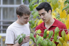 Plant science students examining leaves in the greenhouse