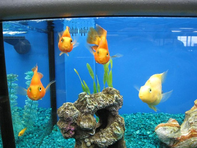 Fish at the pet store c flickr photo sharing for Fish pet shop