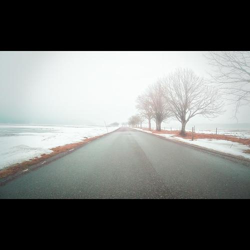 road trees mist fog sweden perspective explore sverige asphalt väg kungsbacka halland tjolöholm explored canon5dmarkii tokinaatx24200mmf3556 afatx242 explore19mar2010