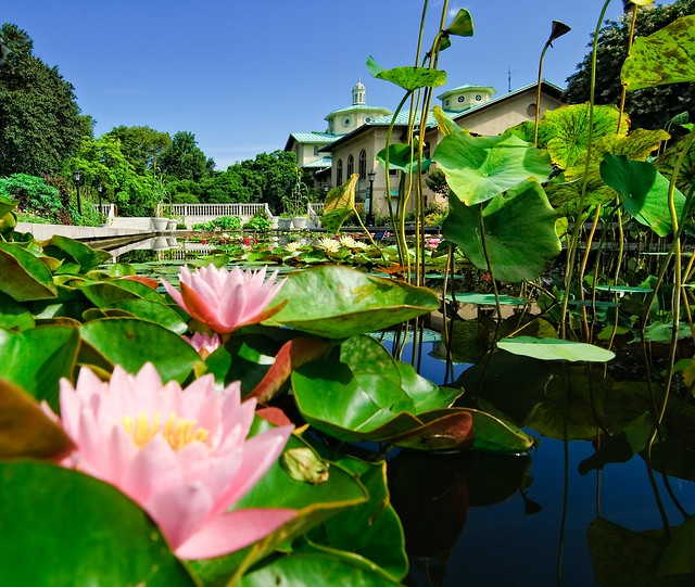 Lily Pool Terrace in July. Photo by Antonio M. Rosario.