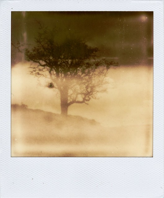 Impossibly foggy tree.