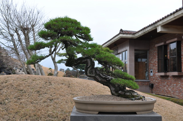 styling, basic forms, bonsai