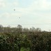 Small photo of Flying Over The Hedge