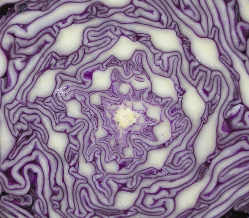 Cabbage by sgbaughn