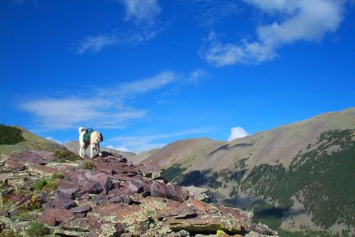 dog colorado hiking eaglepeak packdog camfirephotos