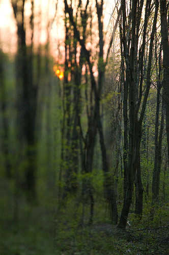 trees sunset blur forest ed woods focus g outoffocus change nikkor 1870mm afs dx endor f3545