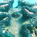 Great Barrier Reef: Giant Clam