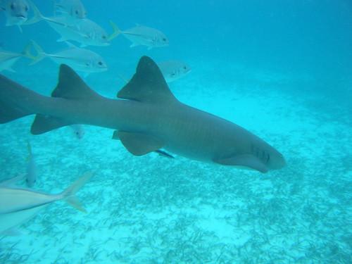 Hol Chan Marine Reserve, Belize