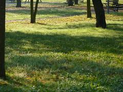 prato in autunno - fall in the park