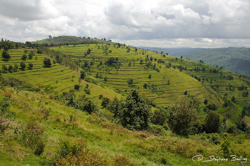 green terraces rwanda hills collines fertile thousandhills millescollines