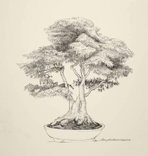 "Dick Rauh, Acer palmatum, 2006  Pen and ink on Arches 300 lb. hot press, 20"" × 16"". © Copyright Brooklyn Botanic Garden"