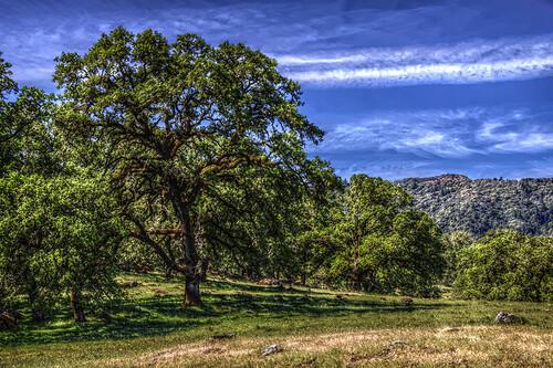 california ca tree canon milano sonoma winery passport cloverdale hdr hopland 50d qtpfsgui