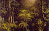 Tropical Forest, Habitat Card, Martin Johnson Heade, http://commons.wikimedia.org/wiki/Category:Martin_Johnson_Heade