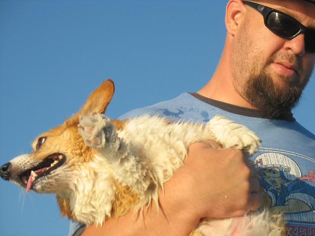 Dog Hernia Surgery Cost Australia