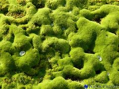 plant, green, produce, natural environment, biome, moss,