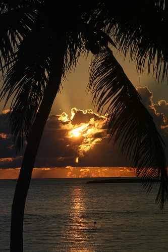 ocean nature sunrise atlantic palmtree tropical caribbean bahamas rememberthatmomentlevel1