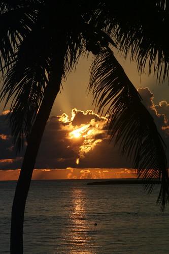 ocean nature sunrise atlantic palmtree tropical caribbean bahamas rememberthatmomentlevel1