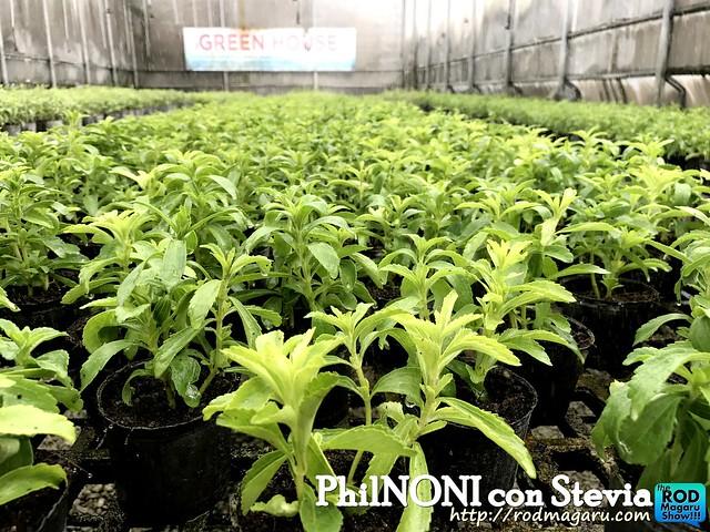 PHilnoni stevia012