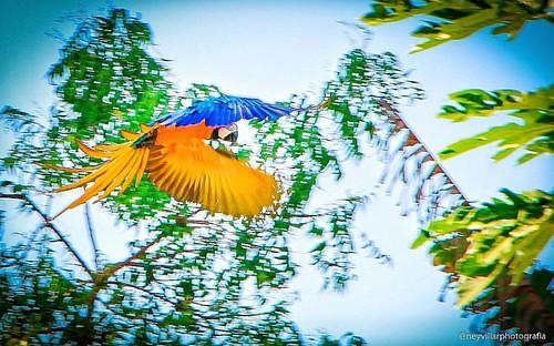 Feliz semana! #arara #nature #natureza #neyvillarphotografia