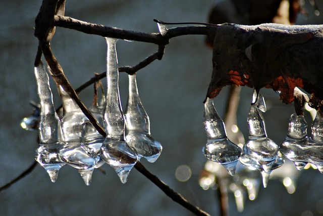 natural ornamental icicles, forest preserve, oakton and caldwell, niles, il 1 4x6 bp