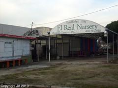 El Real Nursery Santa Clara CA